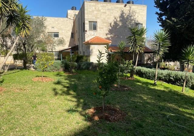 Upper Campus Citrus Tree Grove